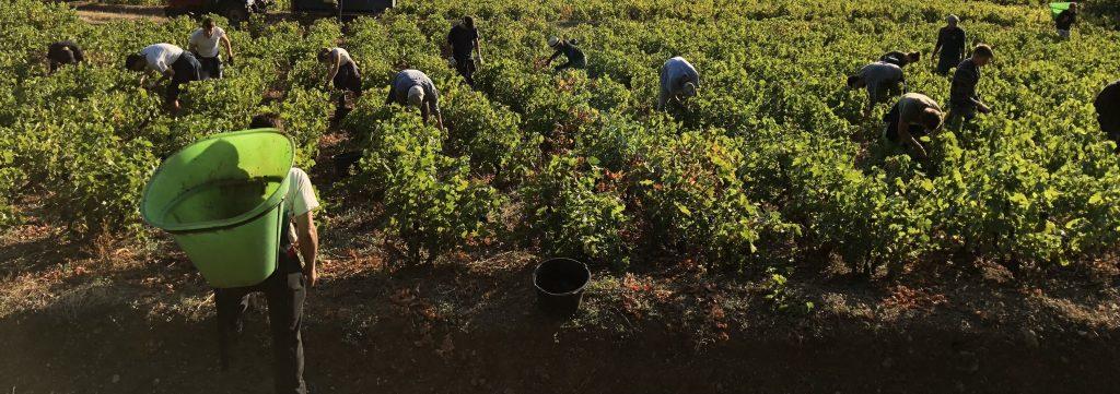 winobranie francja zarobki
