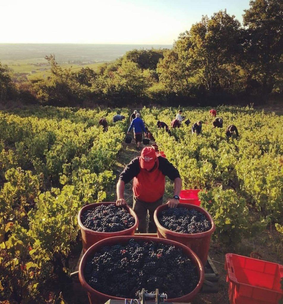 zarobki na winobraniu