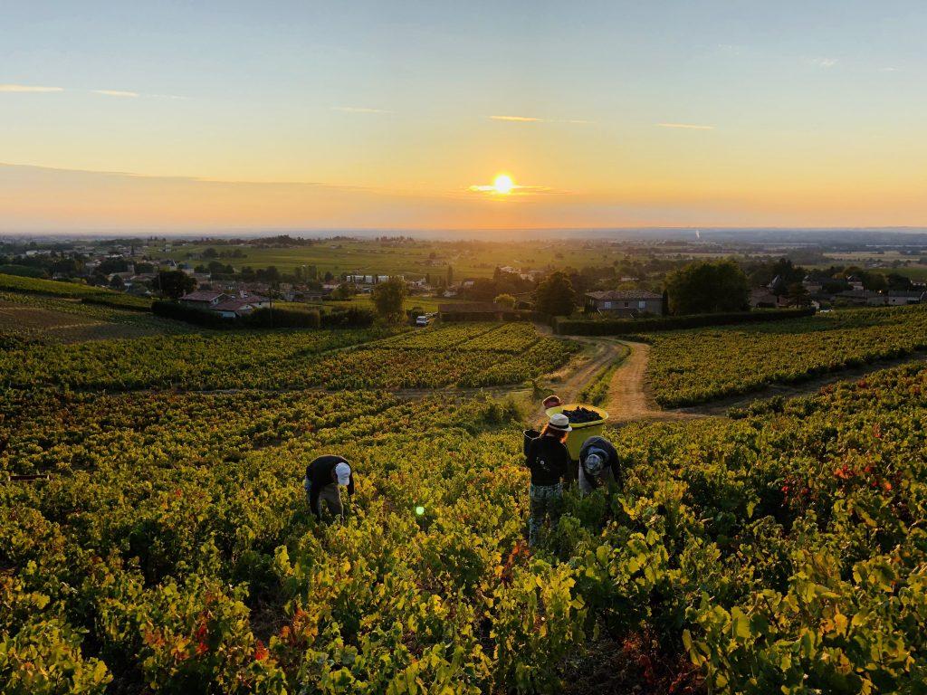 winobranie francja