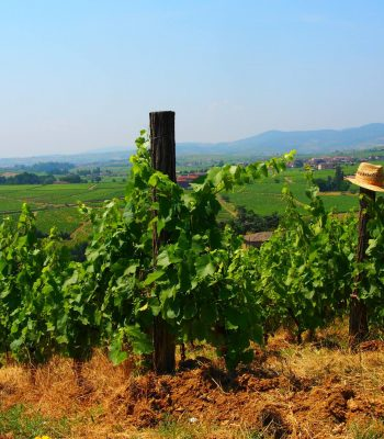 Francja winobranie-min